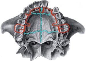 остеопат и стоматолог